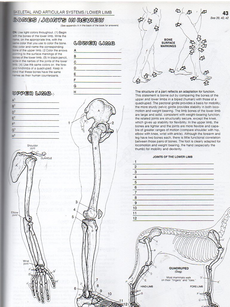 El extranjero » Blog Archive » The Anatomy Coloring Book, by Wynn ...